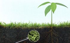 Microbes Will Feed the World, or Why Real Farmers Grow Soil, Not Crops - Modern Farmer