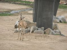 Safari tree protection San Diego Zoo, Kangaroo, Safari, Animals, Baby Bjorn, Animales, Animaux, Animal, Animais