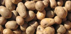 Beauty & the Simple Potato. Wow! Potatoes are amazing spa beauty treatment enhancers--from lightening dark circles under the eyes to dying gray hair and several more natural uses in between.