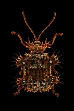 Los emperadores de la tierra;Patas, antenas, aguijones, corazas y ojos compuestos. Un complejo proceso fotográfico descubre la inaudita belleza de los insectos. Incluso las criaturas más corrientes parecen ser parte de un mundo irreal. Este es el exhaustivo retrato de su fascinante morfología.