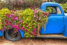 old truck spilling flowers