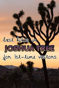 Headed to Joshua Tree National Park for the first time? Here& details on the 3 best Joshua Tree hikes, plus info on where to stay during your trip. National Parks Usa, Joshua Tree National Park, Joshua Tree Hikes, Joshua Tree Camping, Sea To Shining Sea, California Travel, Southern California, Get Outdoors, Best Hikes