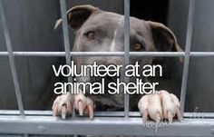 People need to care about this not their outfits or their hair. Volunteer at the animal shelter. Make a difference in this world. You don't have a lot of time. Animals need U The Bucket List, Bucket List Before I Die, Summer Bucket Lists, Bucket List Tumblr, Big Bucket, Look Here, Life List, Just Dream, Dream Big