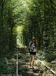 The tree-lined romantic 'tunnel of love' railway line that's so beautiful it's beyond be-leaf.
