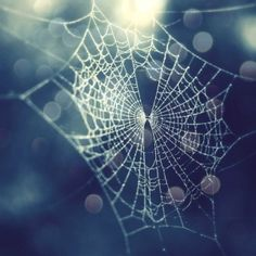 spider web. by ruth