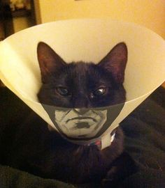 19 awesome and creative pet cones for cats and dogs everywhere to hate on even more.