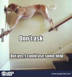 Your source for funny pet pictures and other fun animal pictures. Cute and funny cats and dog pictures are posted every day. See funny animal pictures here Funny Meme Pictures, Funny Dog Memes, Funny Animal Memes, Cute Funny Animals, Funny Animal Pictures, Cute Baby Animals, Funny Cute, Funny Dogs, Dog Humor
