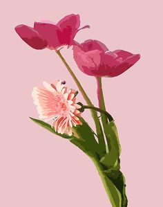 Pink Tulips and Daisy rendering.