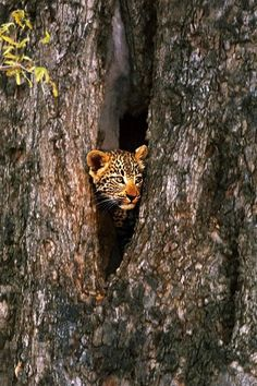 playing hide and seek?