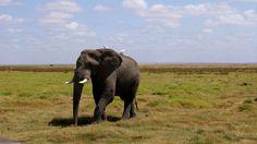 Looking For #KenyaSafaris To Ensure A Great Value Safari Experience?