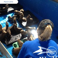 As the 2015 Sea Lion Crisis continues, the SeaWorld Rescue Team is constantly monitoring the pups to ensure they're getting all the care they need for a speedy recovery. #365DaysOfRescue