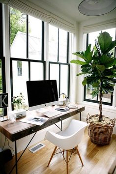casual home office inspiration — love those windows and that lovely, large plant.