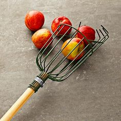 """Apple Picker Designed for harvesting tree fruits such as apples, pears and plums. Steel wire basket is PVC coated for rust resistance. Foam cushion protects fruit as it falls into the basket. Engage the wire teeth around the fruit's stem of the fruit and gently pull. 71"""" long. 13 oz."""