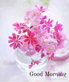 Good Morning Msg, Good Morning Picture, Good Morning Greetings, Good Morning Quotes, Good Morning Flowers Pictures, Morning Pictures, Love Heart Images, Beautiful Flowers, Cricket