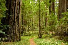 Resultado de imagem para forest road