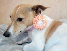 Kanzashi flowers/Kanzashi hair clip/Orange White by AirinFlowers #DogAcccessory #PetAccessory #DogClothes #kanzashi #PetSupplies #CollarFlower