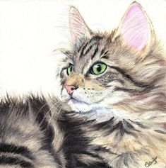 oil pastels | FUR IN THE PAINT: Tabby Cat in Oil Pastel