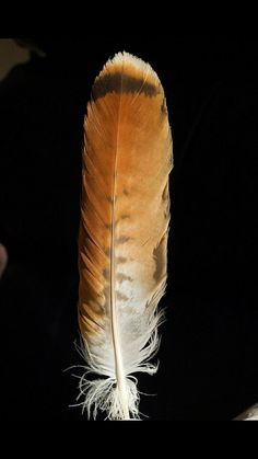 red tail hawk feather meaning Feather Painting, Feather Art, Feather Tattoos, Art Tattoos, Red Tail Hawk Feathers, Bird Feathers, Feather Meaning, Hawk Tattoo, Red Tailed Hawk