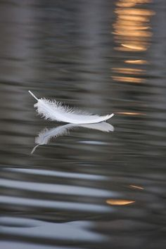Una pluma parece algo muy simple y ligero, tan sutil como una brisa. Una pluma se desliza sin cesar, recorriendo el mundo y sus bellezas.