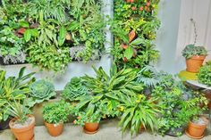 Plants for sale!   82 Myrtle Ave Stamford, CT    #CT #NHV #GREEN #PLANTS #SALE