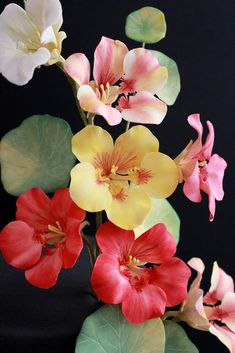 Gum Paste Flowers, Sugar Art, Polymer Clay Crafts, Growing Plants, Flower Art, Lily, Garden, Painting, Flower Photography