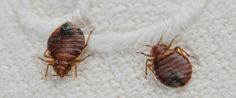 Help Packing For Bed Bug Treatment