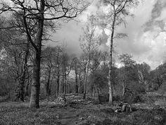 Ashenbank Woods Cobham in Kent