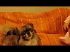 Вика играет с собачкой. Детский канал Viki Land #1