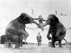 Vintage Circus Photos: Beneath the Big Top Old Circus, Circus Art, Circus Train, Circus Tents, Circus Cakes, Circus Clown, Vintage Circus Photos, Vintage Photographs, Vintage Circus Performers