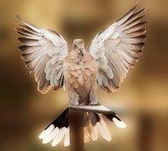 Wings - Angel wings - canon 500d