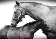 Auckland Photographers - Tareen Photography (www.tareenphotography.com)