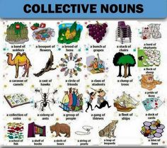 Forum | ________ Learn English | Fluent LandCollective Nouns | Fluent Land