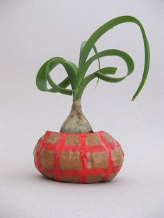 Repugnant Charm: new planters by Kirsten Perry