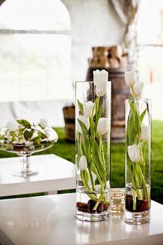 tulipe blanche en vase