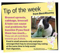 Bunny tip of the week Beware of vegetables that could cause your bunnies bloat & gas.