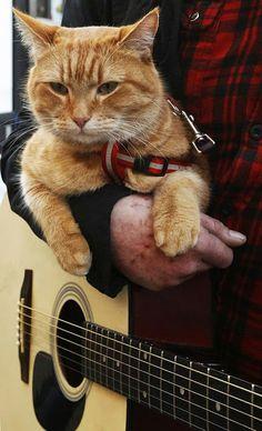 Bob, el gato callejero que cambió la vida a un músico de la calle. | Husmeando por la red