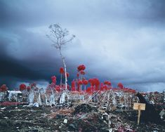 Richard Mosse - Tombstone Blues, from Enclave Graffiti Photography, War Photography, Color Photography, Photography Ideas, Richard Mosse, Infrared Photography, Venice Biennale, Documentary Photographers, Foto Art