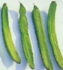 Winged Bean ~ every part of this plant is edible Unique Plants, Golden Yellow, The Fresh, Cactus Plants, Doilies, Green Beans, Spinach, Roots, Stuffed Mushrooms