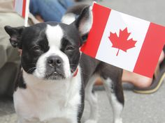 Top Ten Canadian Dog Breeds