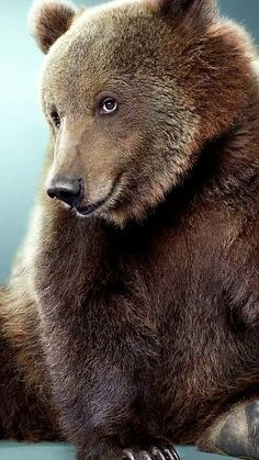 """""""Come here, big boy, let me give you a real bear hug. Animals And Pets, Baby Animals, Funny Animals, Cute Animals, Beautiful Creatures, Animals Beautiful, Love Bear, Bear Art, Tier Fotos"""