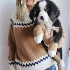 "lyshaeskro: ""pureblyss: ""I just can't even "" That looks like a Bernese a Mountain pup! I can't believe we're getting one in February! """