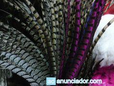 carnaval arrecifes naturales pluma de fais�n - Adanunciador.com | Tu sitio de anuncios clasificados gratis - anunciador espa�a