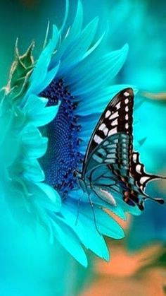 Blue butterfly . . . // Mariposa azul . . .  Cuando llegue a tu ventana , encontraras al amor . . .