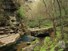 Raven Run Nature Sanctuary, Lexington, Kentucky, USA Photographic Print by Adam Jones at Art.com