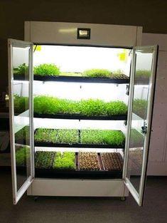 #IndoorGardening, two innovative #hydroponicsystems #growroom