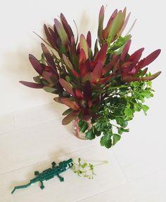 """35 mentions J'aime, 1 commentaires - Yuko Kawasaki (@yuko6977) sur Instagram: """"#flowerpower  #flowerstagram  #flower  #flowers  #instaflowers  #instaflower  #kyoto  #myroom…"""""""