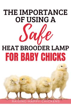 It's imperative to have a safe, reliable heat source in the brooder to keep chicks warm when they're little. Their downy fluff is not enough to keep them warm. Without a mother hen, they need to have additional help until they grow feathers at about 11 weeks. But traditional heat lamps can be dangerous. Here's what you need to know. Raising Meat Chickens, Raising Ducks, Backyard Coop, Chickens Backyard, Brooder Box, Downy, Baby Chicks, Feathers, Chicken Coops