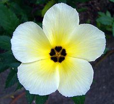 flores com seus nomes - Pesquisa Google