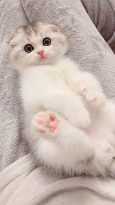 Source: unknown[Thank you very much!] – Click Visit To Watch More Vid… Sooo CuTe! Source: unknown[Thank you very much!] – Click Visit To Watch More Videos – Cute Baby Cats, Cute Cat Gif, Cute Little Animals, Cute Cats And Kittens, Cute Funny Animals, I Love Cats, Kittens Cutest, Cute Dogs, Pretty Cats