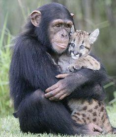 L'amore non ha confini di specie.....   Gli animali ci dimostrano il significato del vero amore....  L'amore senza barriere,pregiudizi o paure.......  L'amore vero senza confini o limiti,che va oltre ciò che siamo abituati a credere immutabile....